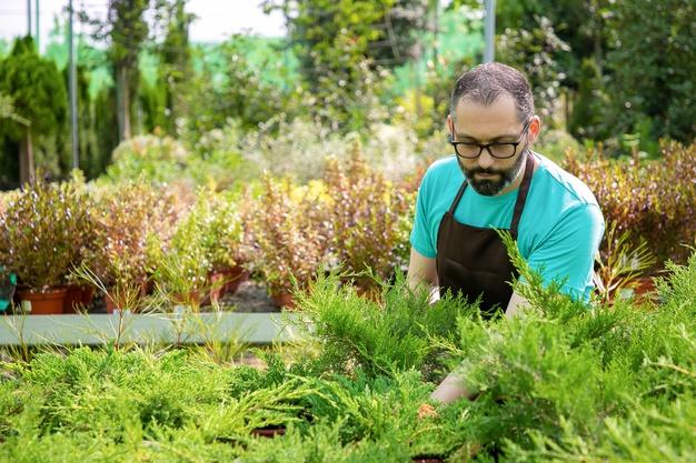 مزایای مفید باغبانی برای سلامتی