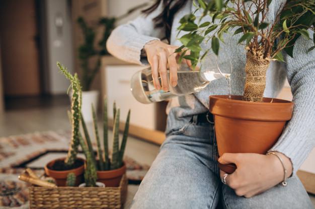 نكاتي در مورد باغبانی شهری و فضاهای کوچک