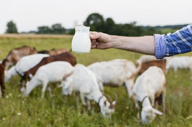 فواید شیر بز چیست | سیوطب