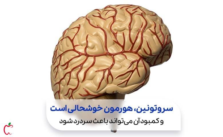 شبکه رگ های درون مغز سیوطب